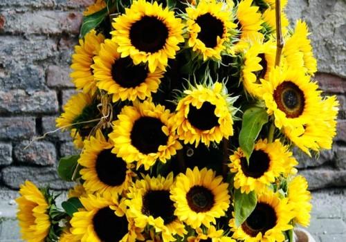 stroik słoneczniki