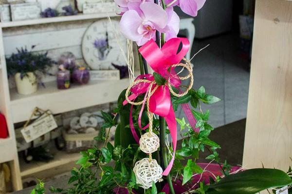 kwiaty doniczkowe racibórz