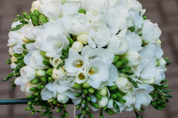 biały bukiet ślubny frezje
