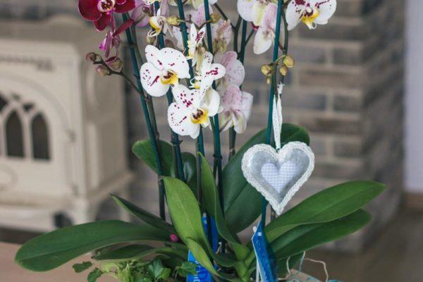 kwiaty doniczkowe raciborz (3)
