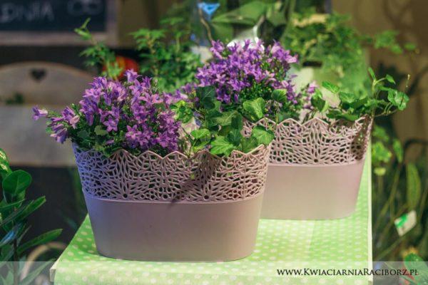 kwiaty doniczkowe raciborz (4)