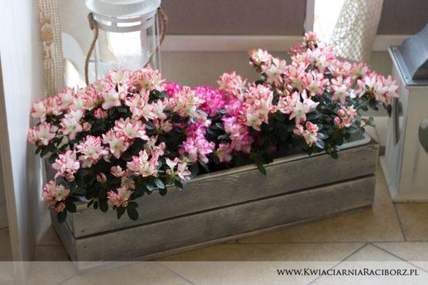 kwiaty doniczkowe raciborz