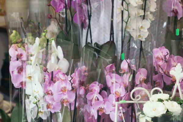 kwiaty doniczkowe raciborz (7)