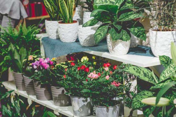 kwiaty doniczkowe raciborz ali-art-3