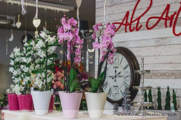 kwiaty doniczkowe raciborz ali-art-6